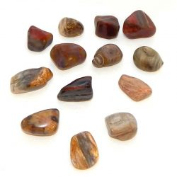 Petrified Wood Tumbled Stone