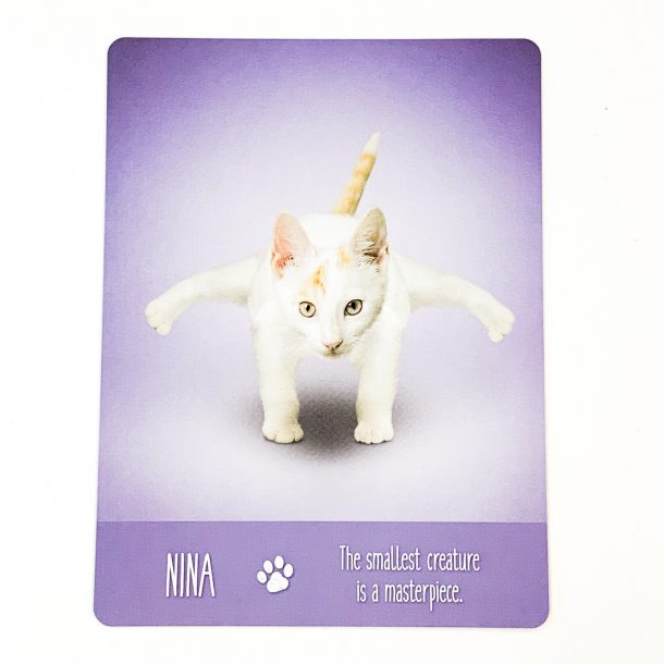 Yoga Cats Card 2