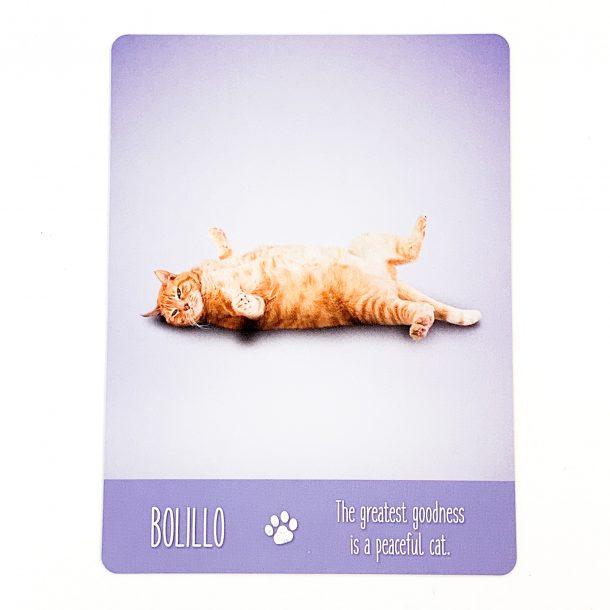 Yoga Cats Card 3