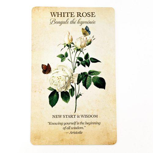 Botanical Inspirations Card 3