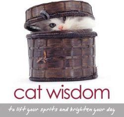 Cat widsom Cards