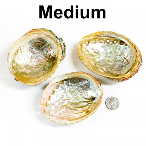 Abalone Shell Medium with Quarter