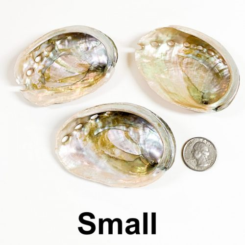 Abalone Shell Small with Quarter