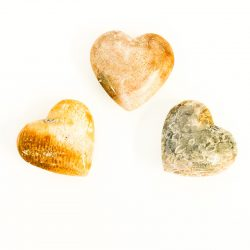 Coral Fossil Heart